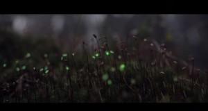 Биолуминесцентна гора