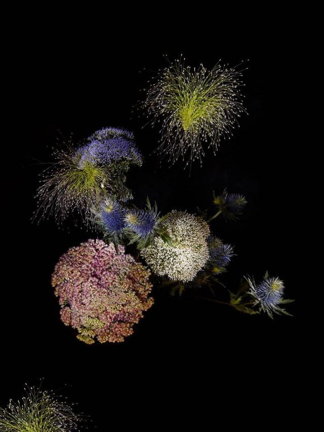 снимки на цветя, аранжирани като зари от Сара Иленбергер