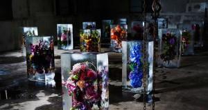 Замразени цветя на Азума Макато