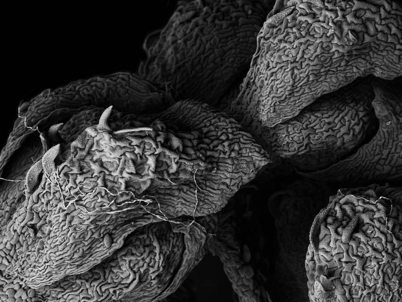 Снимки с микроскоп на разлгащи се растения