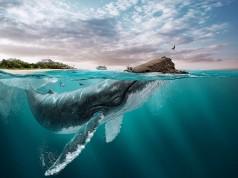 Изумителни творби на бразилския дигитален артист Лео Роча
