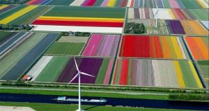 поля от лалета в Холандия