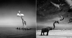 Черно-бели фотоманипулации на Сара Деримър