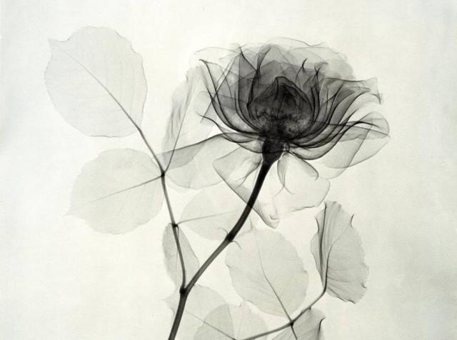 рентгенови снимки на цветя