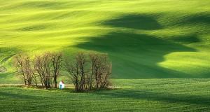 поле в Моравия